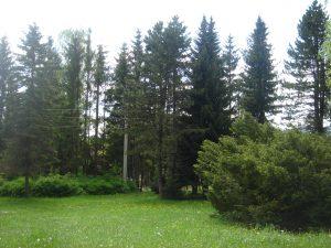 Природа Кнежева (14)